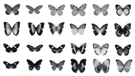 outmoded: set of butterfly design isolated on white