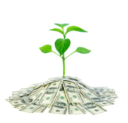 pile of leaves:  plant in pile of money  Stock Photo