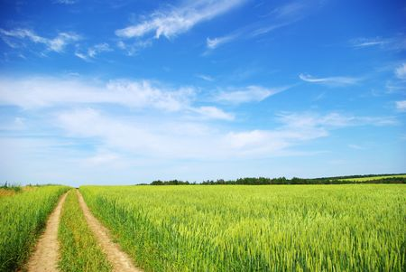 lea: field on a background of the blue sky