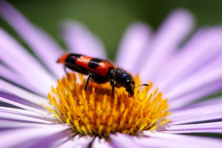 Image of beautiful  violet flower and insect