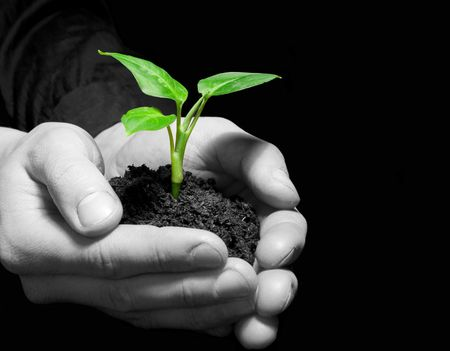 replant: Hands holding sapling in soil