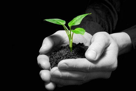 Hands holding sapling in soil Stock Photo - 4805601