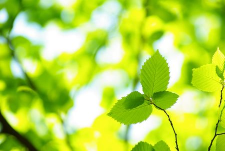 glades: green leaves background in sunny day Stock Photo