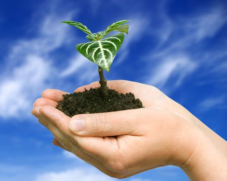 Hands holding sapling in soil on sky
