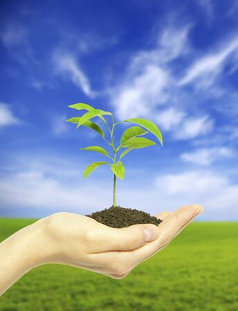 replant: Hands holding sapling in soil  on field