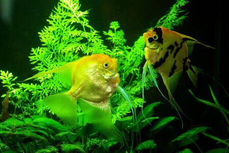 fish in a aquarium water photo