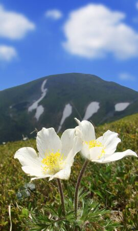 BEAUTIFUL FLOWERS ON BACKGROUND OF MOUNTAINS photo