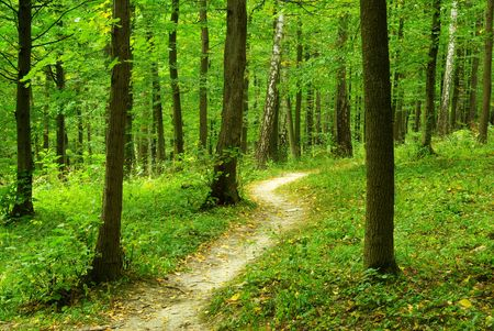 woodland path: a path is in the green forest