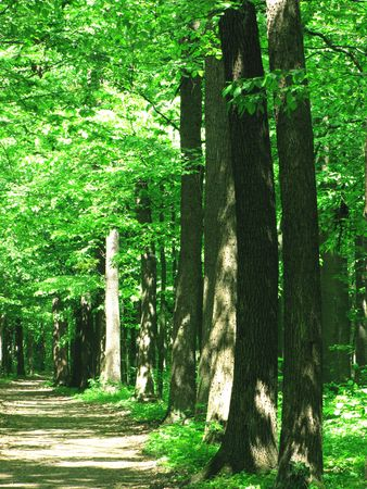 Early morning sun in the green forest                                        photo