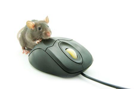 ratty: Ratto e un mouse su sfondo bianco