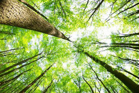 uplifting: Fondo de bosque verde en d�a soleado  Foto de archivo