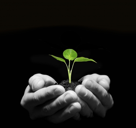 Hands holding sapling in soil Stock Photo - 5992313