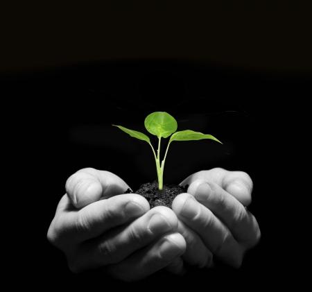 crecimiento planta: Manos sosteniendo plantones en el suelo