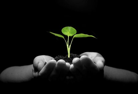 sustainability: Hands holding sapling in soil