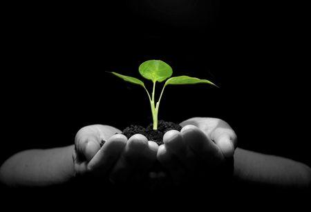 environmental: Hands holding sapling in soil
