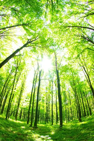 uplifting: Early morning sun in the green forest