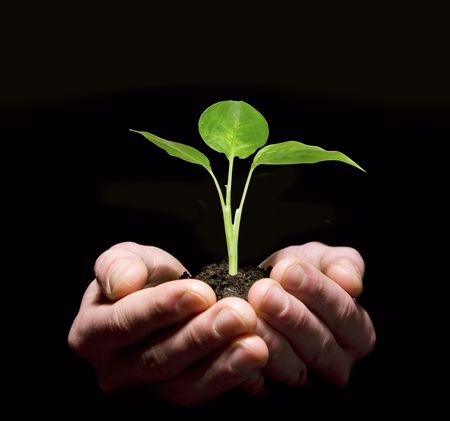 Hands holding sapling in soil Stock Photo - 6307551