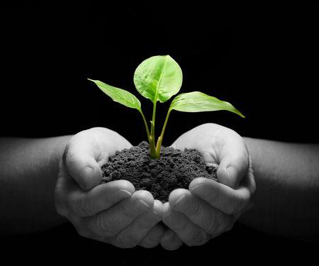 sustain: Hands holding sapling in soil on black Stock Photo