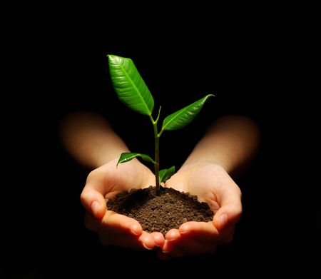 Hands holding sapling in soil on black photo