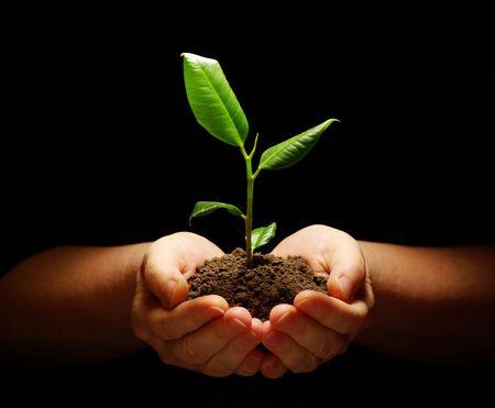 pflanze wurzel: B�umchen im Boden auf schwarz holding h�nde  Lizenzfreie Bilder