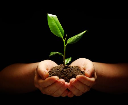 Hands holding sapling in soil on black Stock Photo