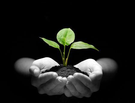 plant with roots: Manos sosteniendo plantones en el suelo sobre negro  Foto de archivo