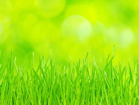Green grass isolated on green background photo
