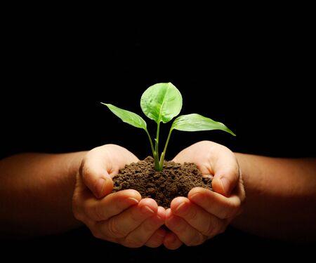 planta con raiz: Manos sosteniendo plantones en el suelo sobre negro  Foto de archivo