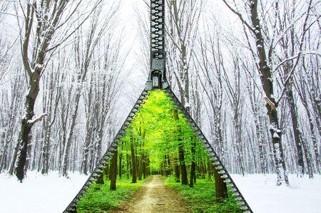 prachtige lente forest en de weg