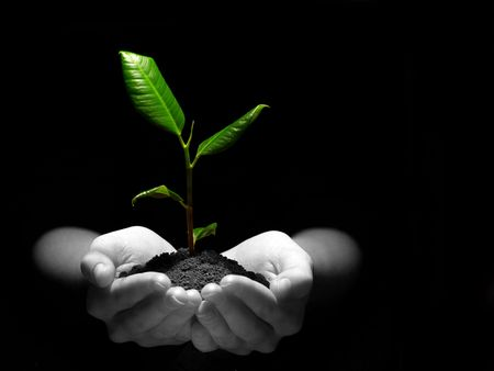 sustain: Hands holding sapling in soil on black Stock Photo