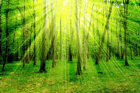 the magnificence: Early morning sun in the green forest                                                                                                           Stock Photo