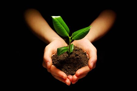 Hands holding sapling in soil photo