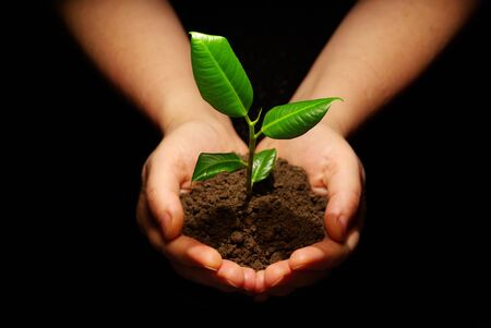 black soil: Hands holding sapling in soil on black Stock Photo
