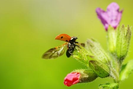 ladybug sitting on the blade of grass Stock Photo - 7397308