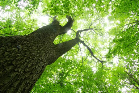 uplifting: green forest  background in a sunny day