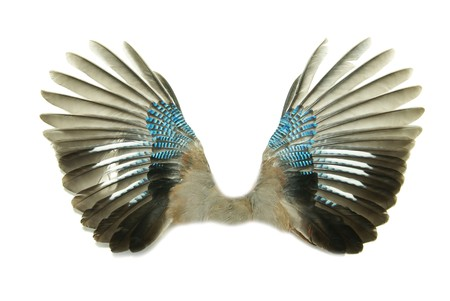 spread wings: Pair of wings isolated on white