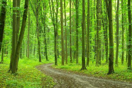 houtsoorten: achtergrond van de groene bossen in zonnige dag