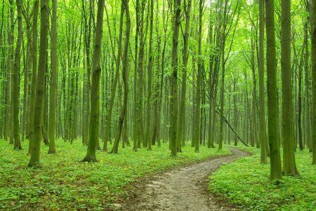 lush foliage: green forest background in sunny day