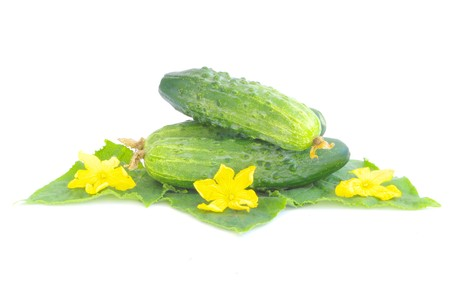 Cucumbers on white background with green leaf photo