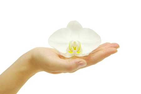 Hand and orchid over isolated white background Stock Photo