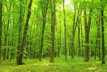 jungle green: fondo del bosque verde en d?a soleado Foto de archivo