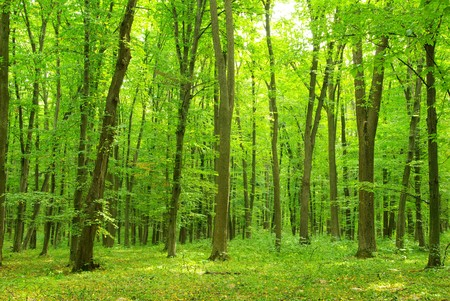 jungle foliage: green forest background in sunny day