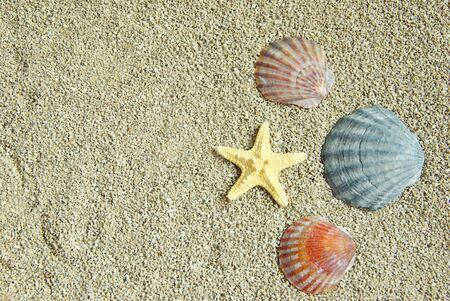 starfish and shells on the beach photo