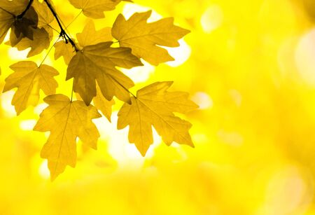autumn leaves background in sunny day Stock Photo - 8008045