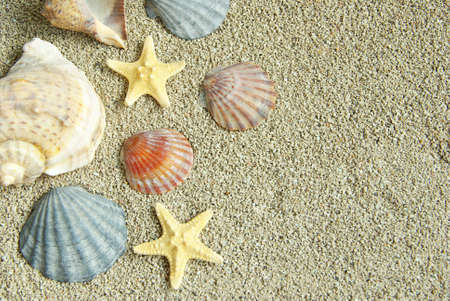 starfish and shells on the beach photo