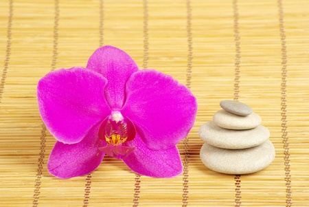 Pink orchid and stones on the wood background photo