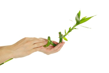Hand and bamboo over isolated white background photo