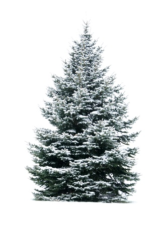 The Bare Christmas tree ready to decorate photo