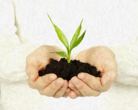 plant in female hands isolated on white background Stock Photo - 8814014