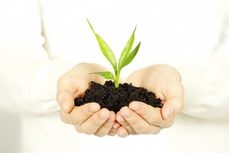 young plant: plant in female hands isolated on white background